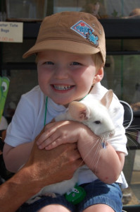 Boy holding Chinchilla